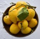 lemon-4006571_640