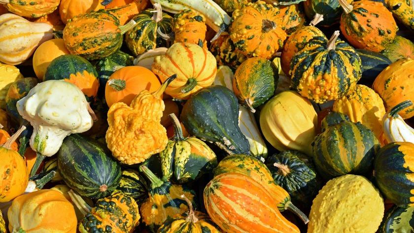 pumpkin-1642338_1920.jpg